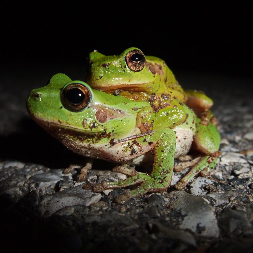 On frog level