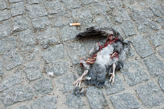Berlin, street, dead, bird, död, fågel, gata, cigarette