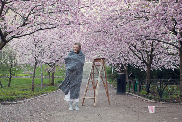 cherry blossom, Göteborg